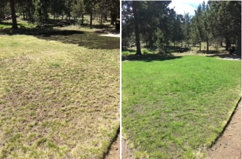 lawn renovation in bend, oregon